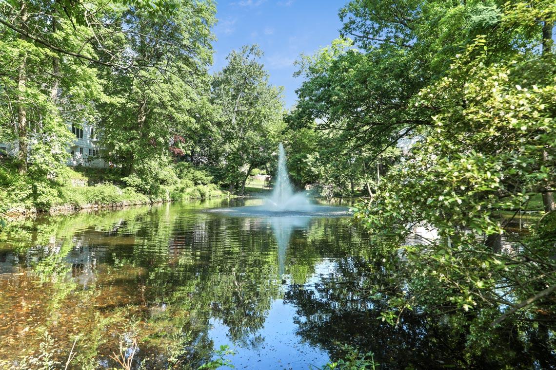 5 – 5 Farley Road – Pond